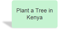 Plant a tree in kenya